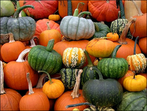 Tons-of-Different-Pumpkins-at-The-Peach-Tree-Farm-near-Columbia-Missouri