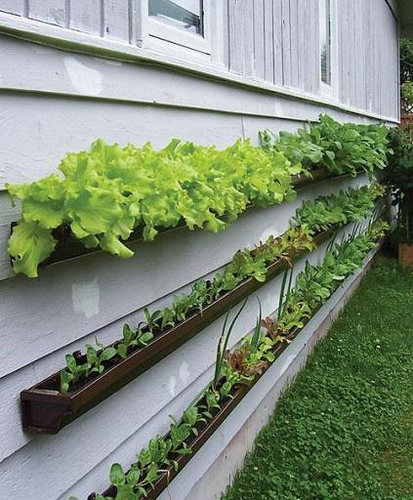 vertical-gardening-ideas-a-gallery-on-flickr-413x500